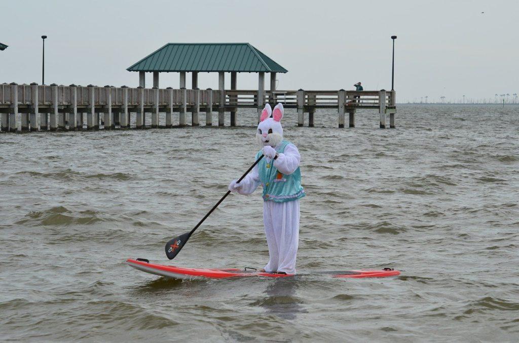 paddle, mer, lapin, enterrement vie garçon